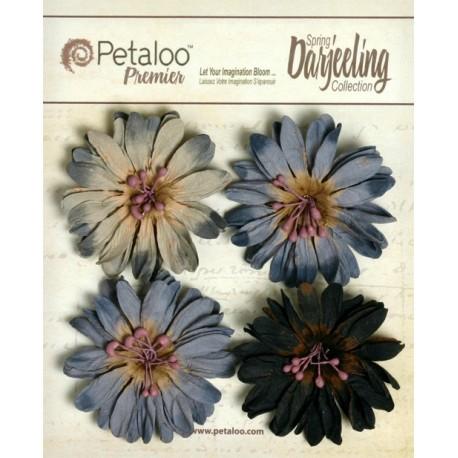 PETALOO. Daisies Grey