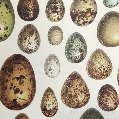 2 Papeles ROSSI Eggs 50x70