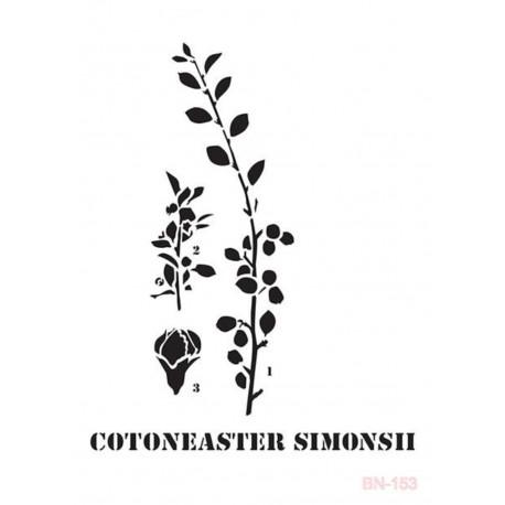 Stencil COTONEASTER Cadence