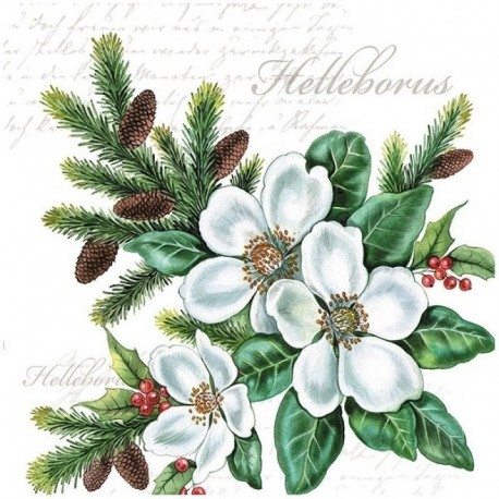 SERVILLETAS- White Helleborus